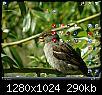 Click image for larger version  Name:fishosdesktop20081102.jpg Views:109 Size:289.8 KB ID:7810